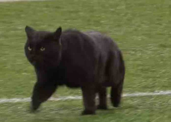 Black Cat Runs Onto Field During Monday Night Football, Announcer Kevin Harlan Makes Witty Call [VIDEO]