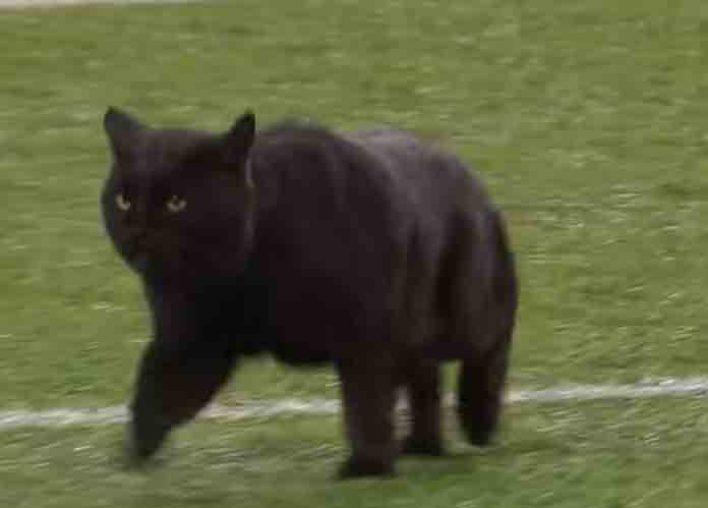 Vikings Beat Cowboys 28-24 Despite Dallas Naming Black Cat MVP